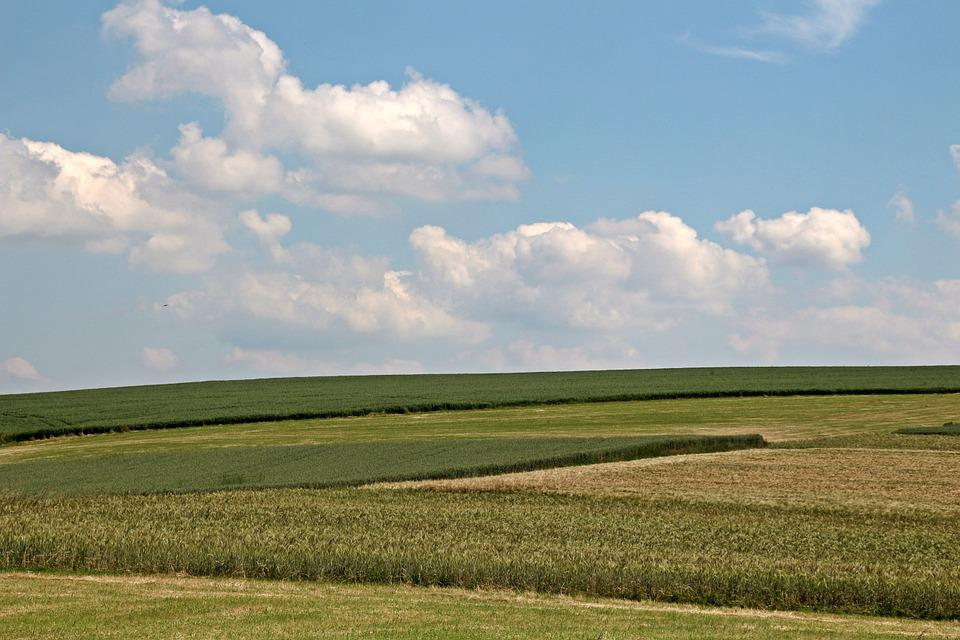 Field, Cereals, Agriculture, Cornfield, Meadow