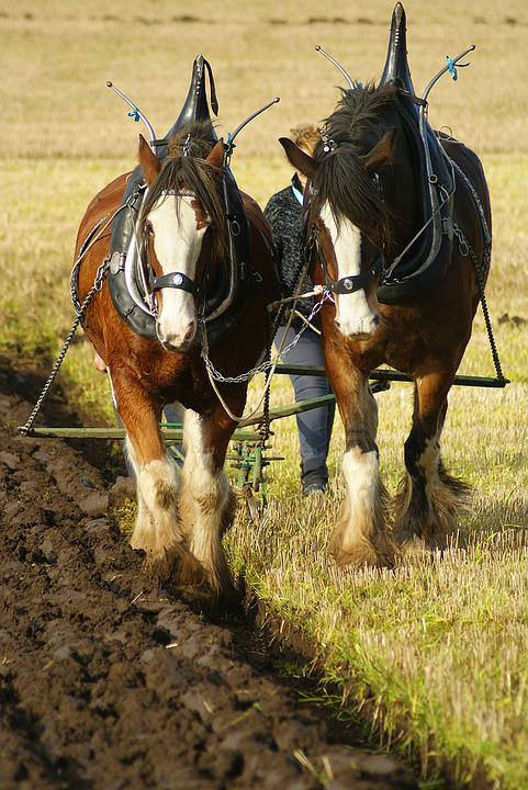 Ploughing, Horse, Field, Farm, Plough, Agriculture