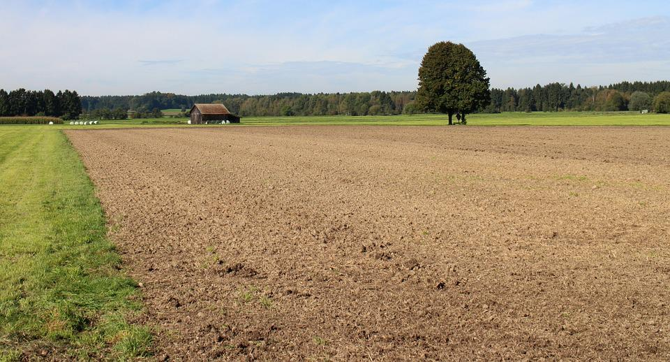 Agriculture, Arable, Nature, Field, Landscape