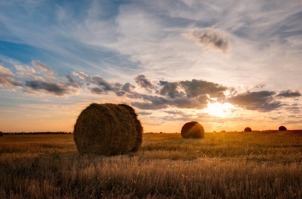 Landscape, Field, Agrofirm, Sky