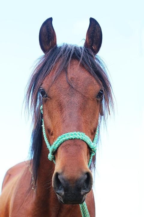 Horse, Field, Animals, Beast