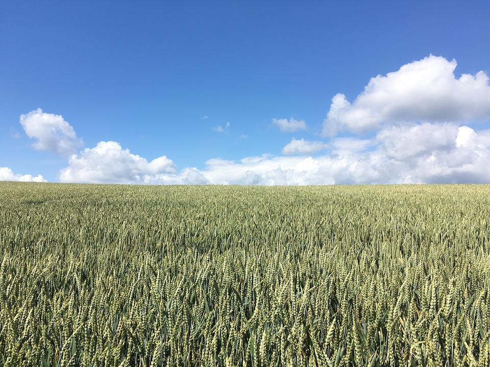Field, Clouds, Sky, Summer, Landscape, Cereals, Fields