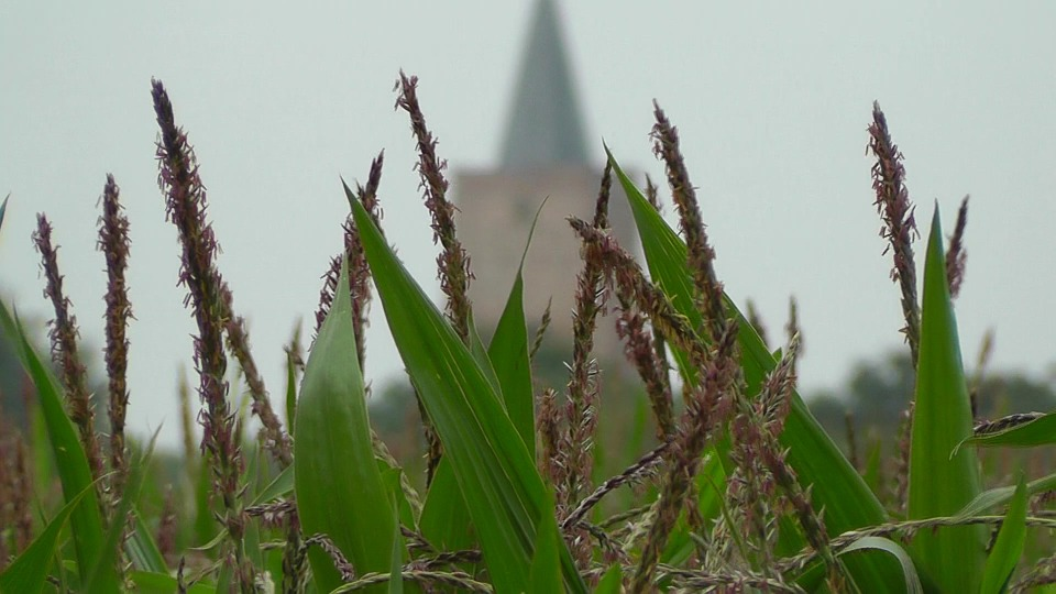 Nature, Field, Landscape, Cereals, Spike, Fields