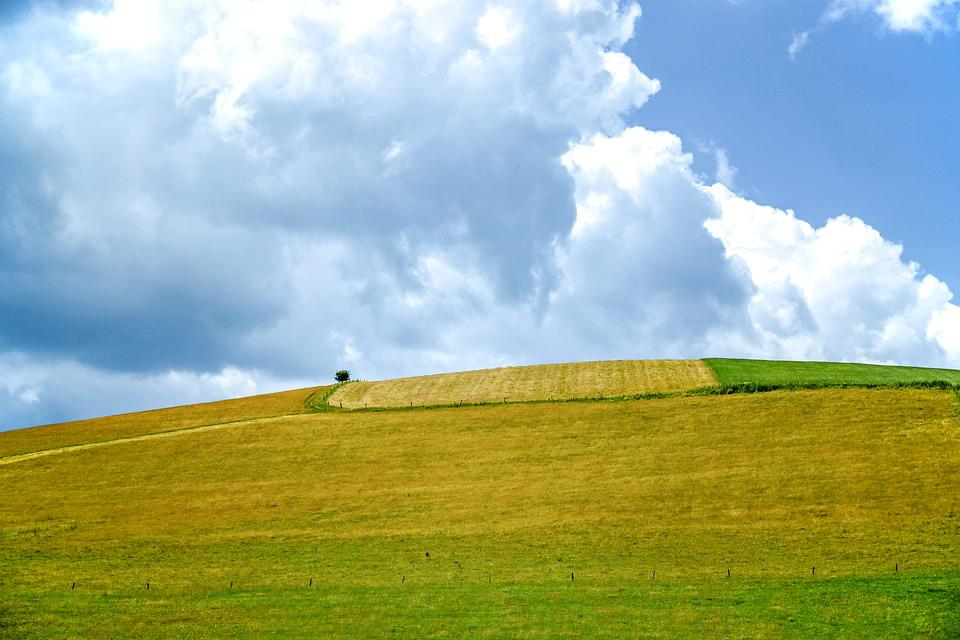 Pasture Land, Meadow, Role, Field Crops, Nature, Grass