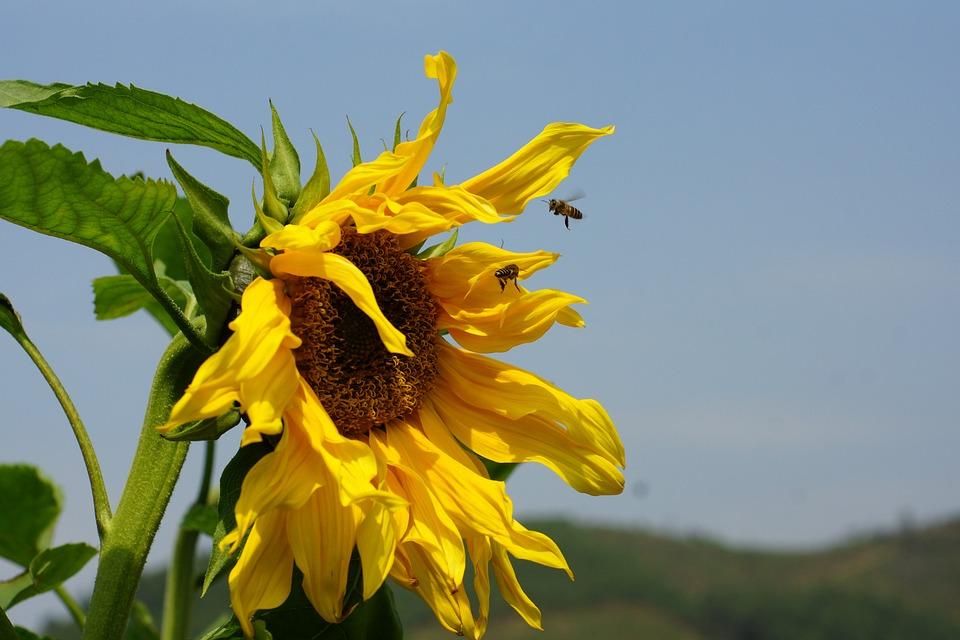Nature, Summer, Flora, Flower, Field