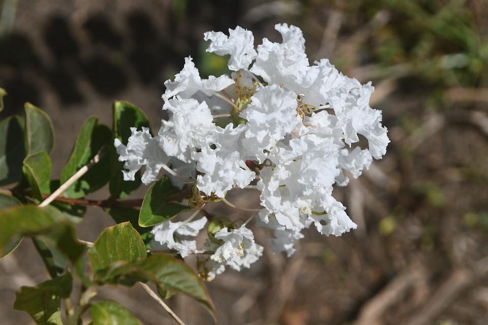 Flower, Flowers, Nature, Summer, Field, Plant, Botany
