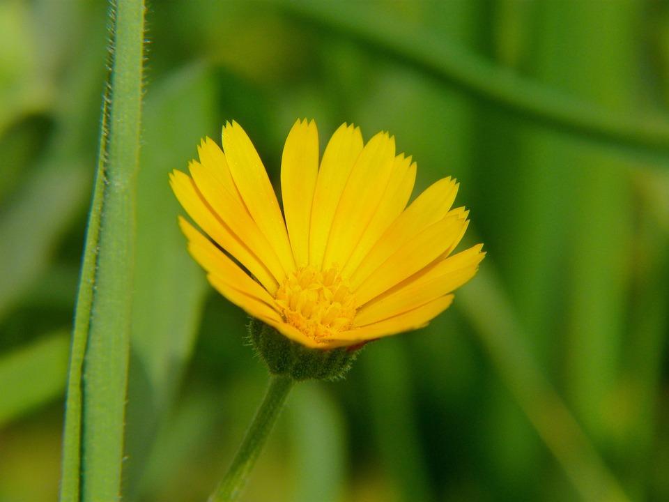 Nature, Plant, No One, Summer, Flower, Closeup, Field