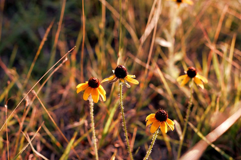 Free photo field flower yellow flowers yellow wild bloom max pixel flower yellow wild yellow flowers bloom field mightylinksfo
