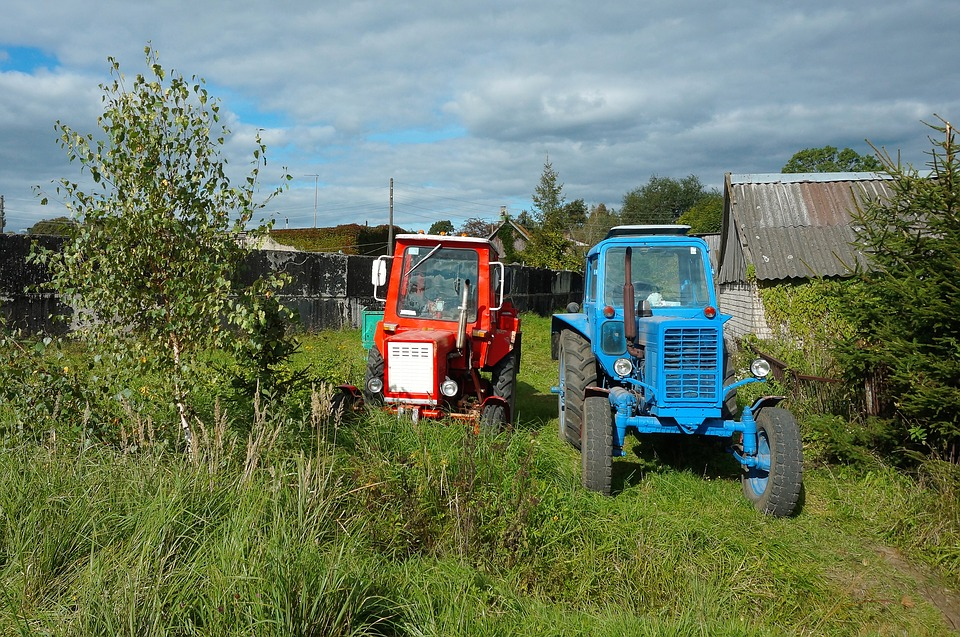 Tractor Blue, Field, Young, Food, Harvest, Work