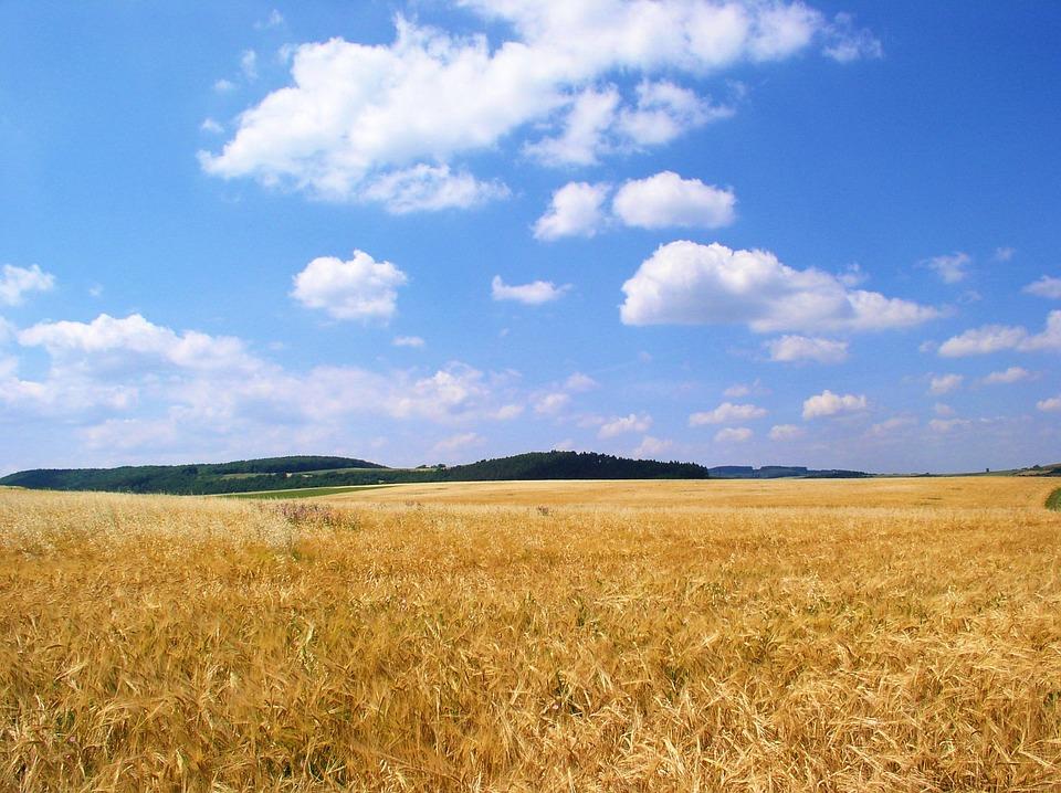 Field, Grain, Sky