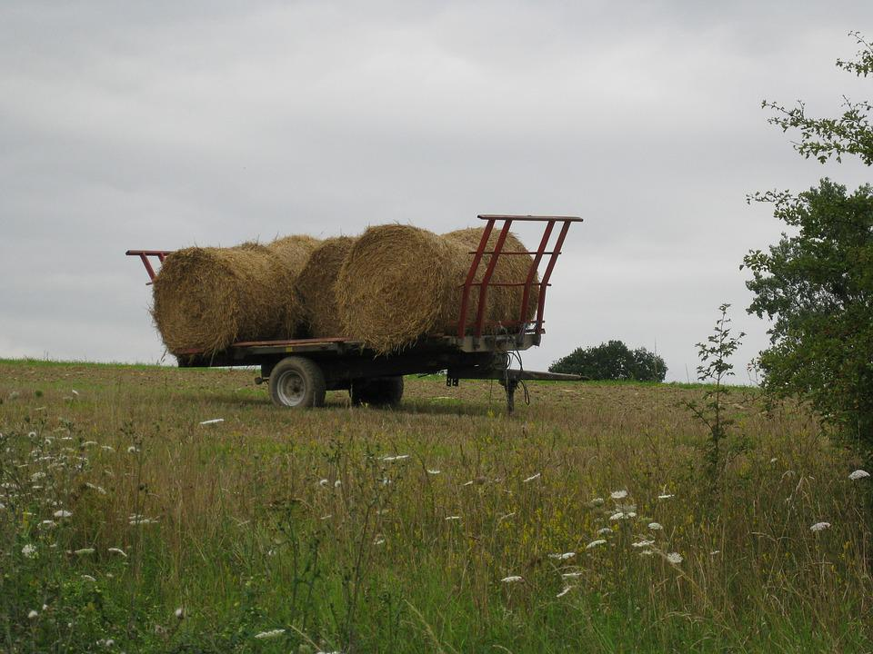 Field, Agriculture, Grass, Nature, Farm, Hay, Straw