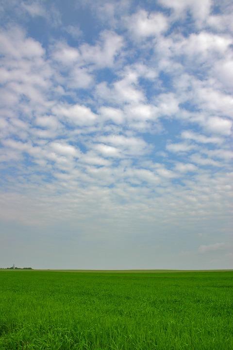 Field, Horizon, Sky, Grass, Grassland, Meadow, Pasture