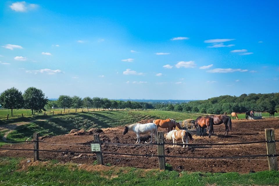 Landscape, Pasture, Nature, Field, Rural, Meadow, Graze
