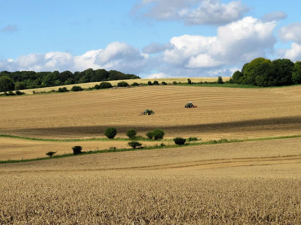 Harvest, Crops Countryside, Field, Agriculture, Tractor