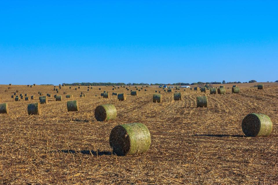 Field, Hay Bales, Hay, Farmland