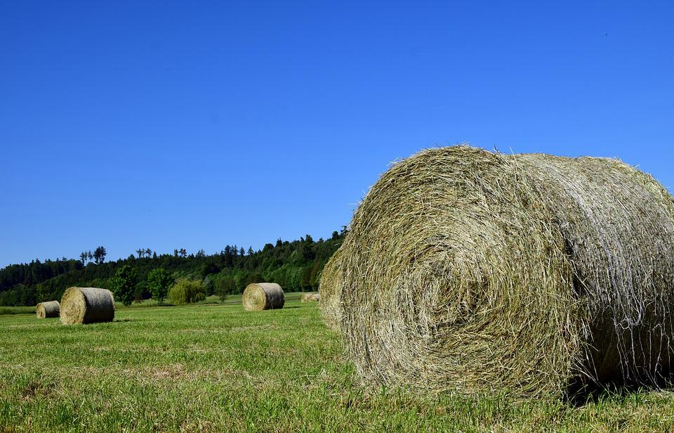 Hay, Hay Bales, Agriculture, Field, Harvest, Meadow