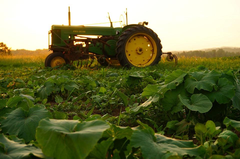 agriculture tractor john deere green field pumpkin