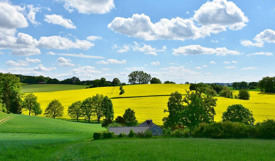 Landscape, Nature, Oilseed Rape, Field, Agriculture