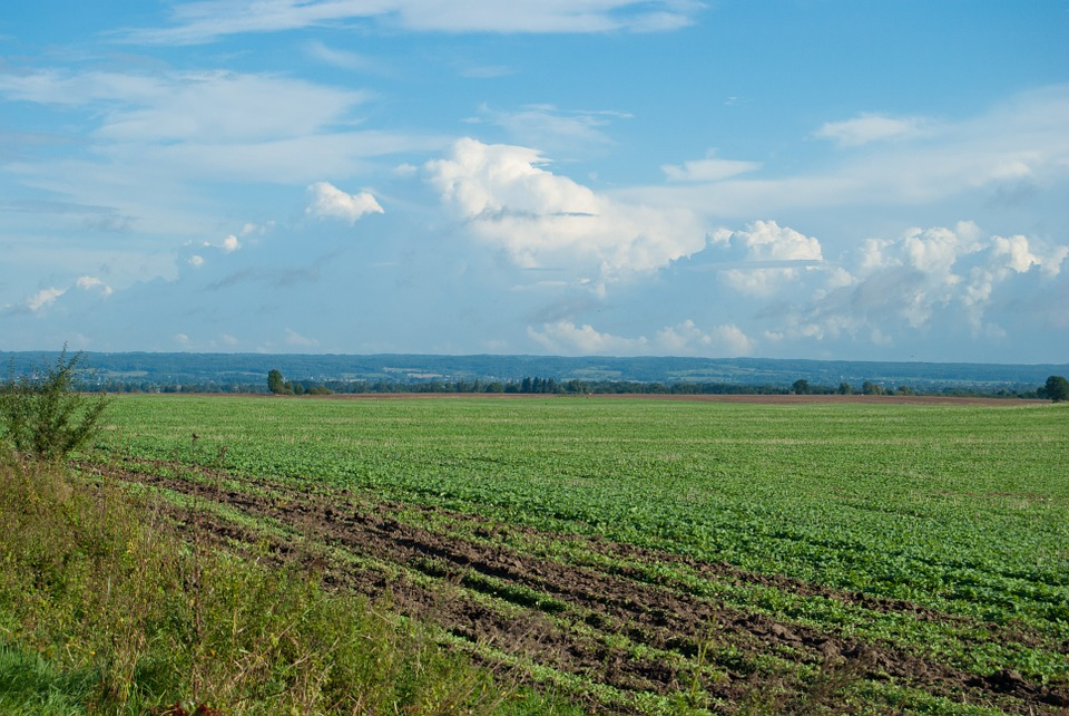 Field, Clouds, Landscape