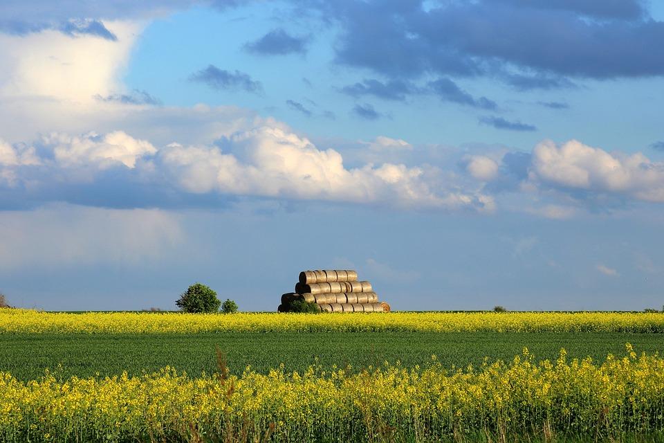 Spring, Field, Landscape Rural, Nature, Green