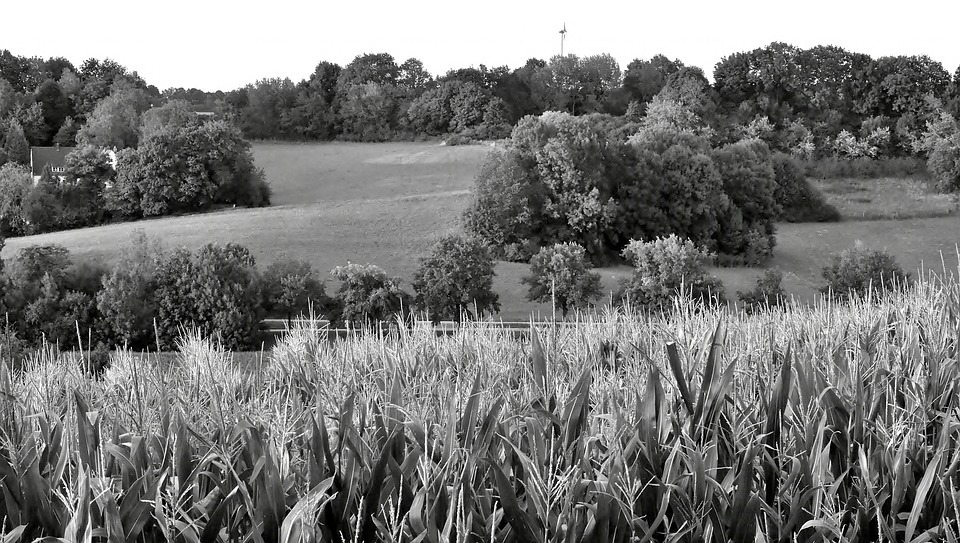 Landscape, Twilight, Black And White, Field, Trees