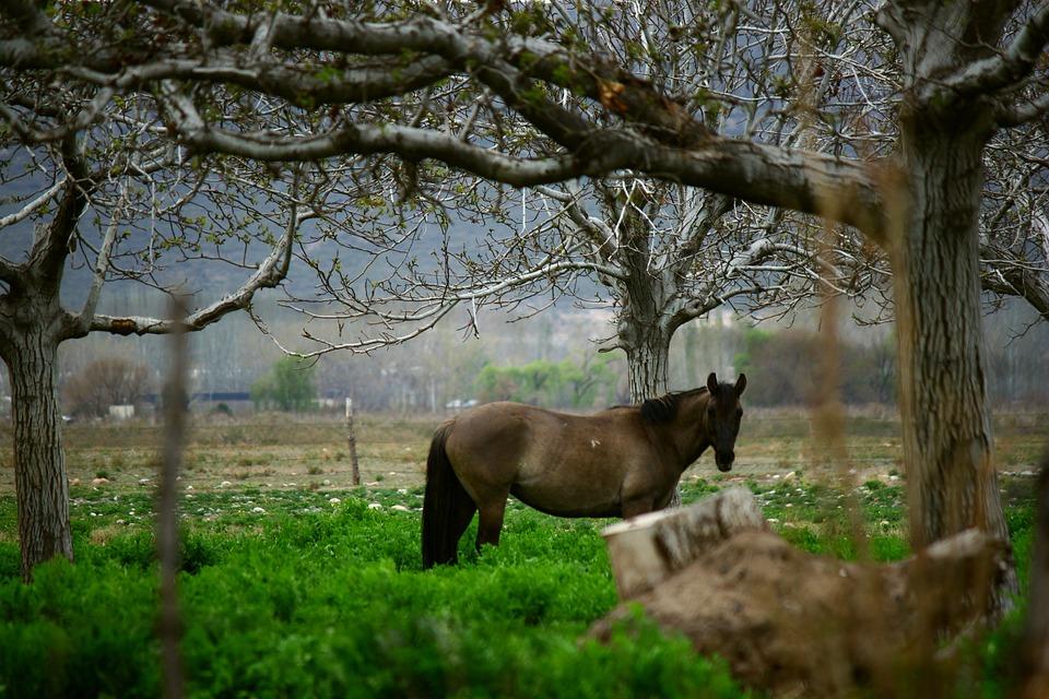 Horse, Mountain, Field, Landscape, Mountains, Winter