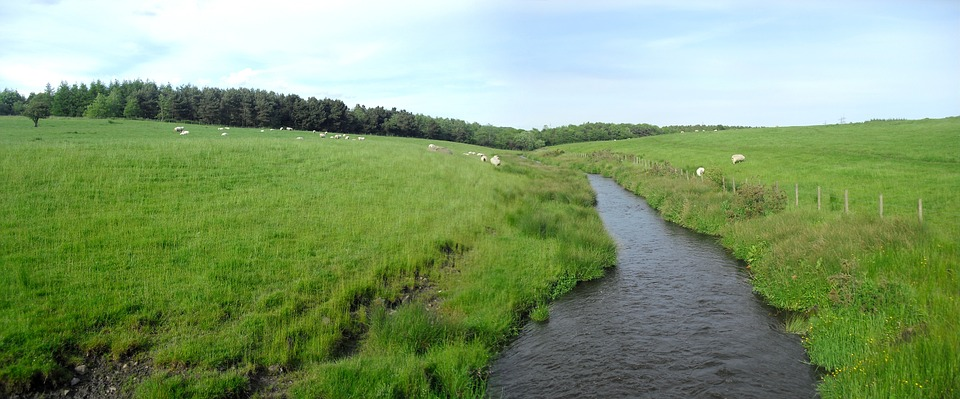 River, Water, Lochore, Meadows, Field, Green Grass