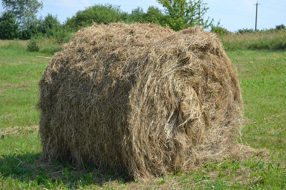 Hay, Field, Agriculture, Meadow, Cultivation