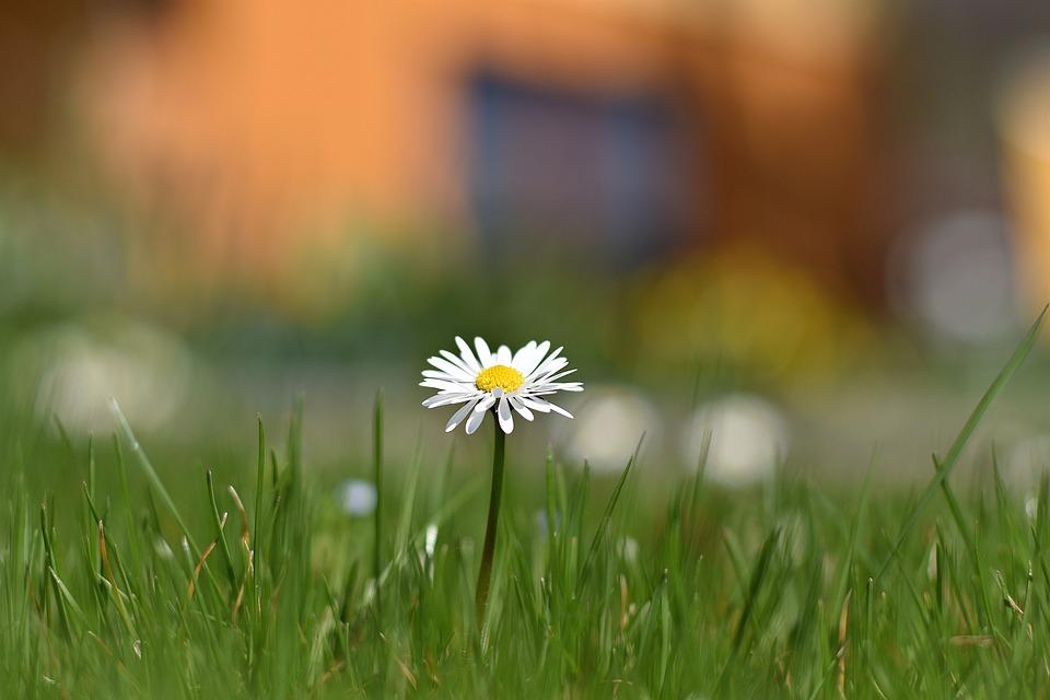 Grass, Nature, Summer, Meadow, Field