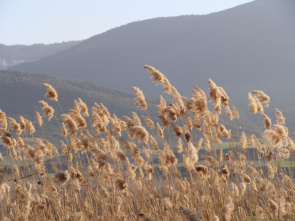 Nature, Breeze, Field