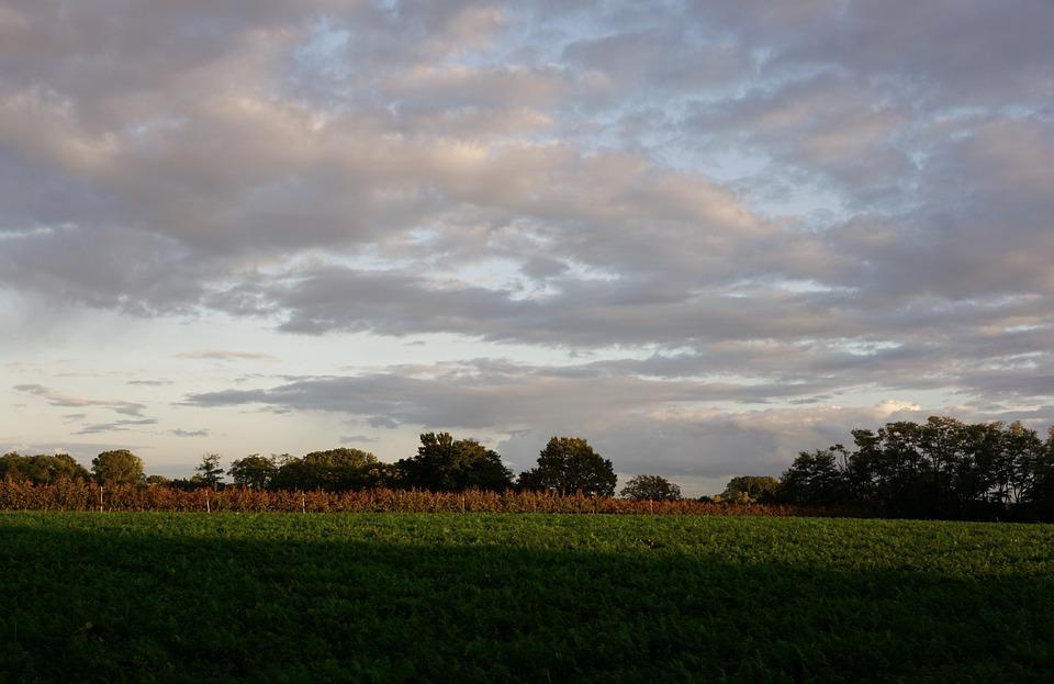 Sky, Clouds, Field, Landscape, Nature, Summer