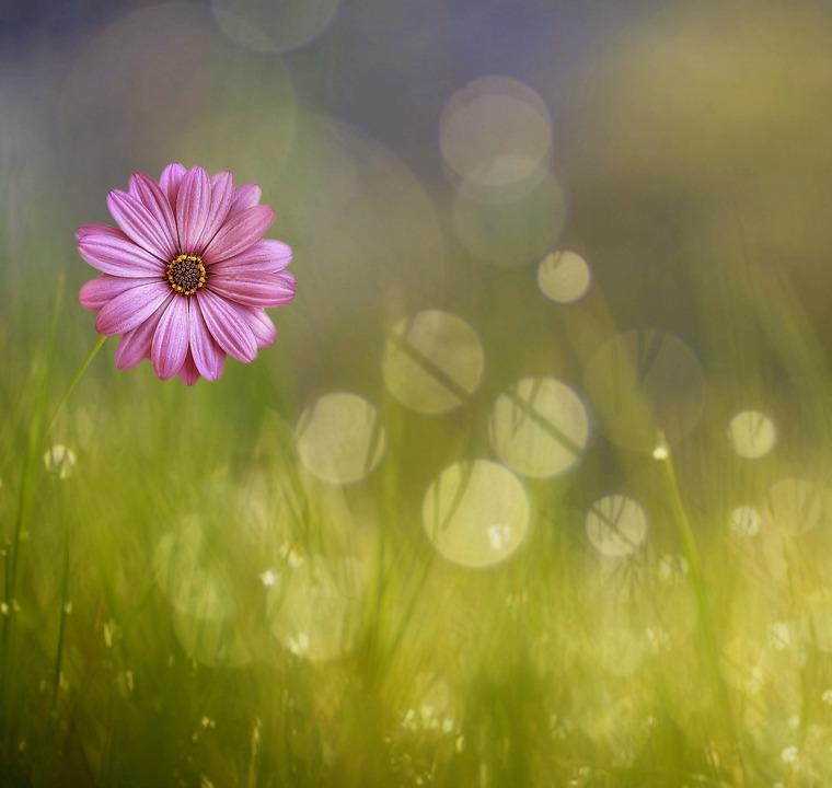 Flower, Summer, Nature, Grass, Field, Flora, Color