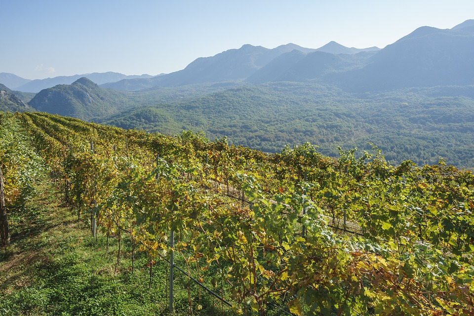 Field, Grapes, Nature, Mountains