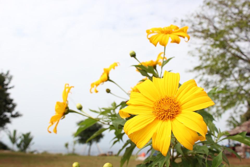 Nature, Flora, Summer, Flower, Field, Hayfield
