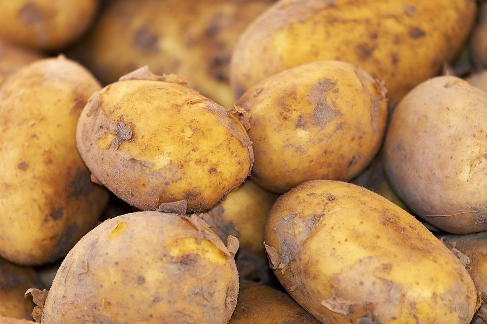 Potato, New Crop, Erdfrucht, Field, Nature