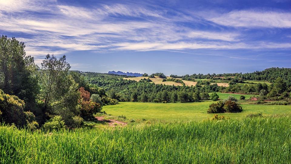 Rural Landscape, Field Of Cereals, Agriculture, Cereal