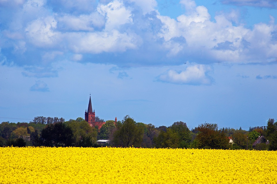 Gristow, Church, Field Of Rapeseeds, Spring, Landscape