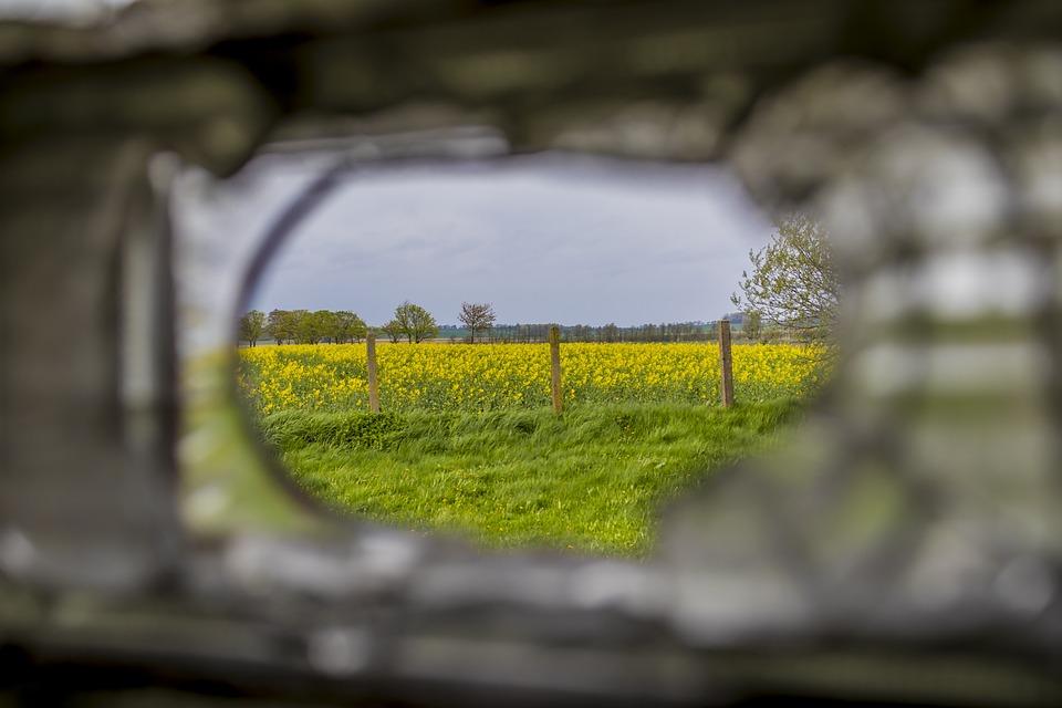 Oilseed Rape, Field, Agricultural Plant, Landscape