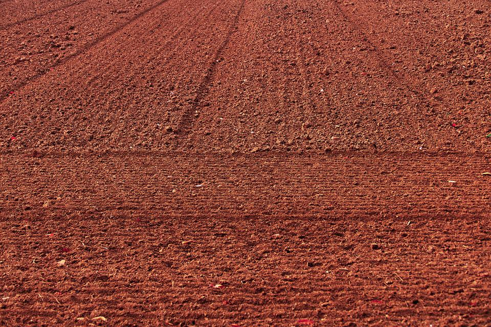 Field, Arable, Agriculture, Field Order, Dry, Lines