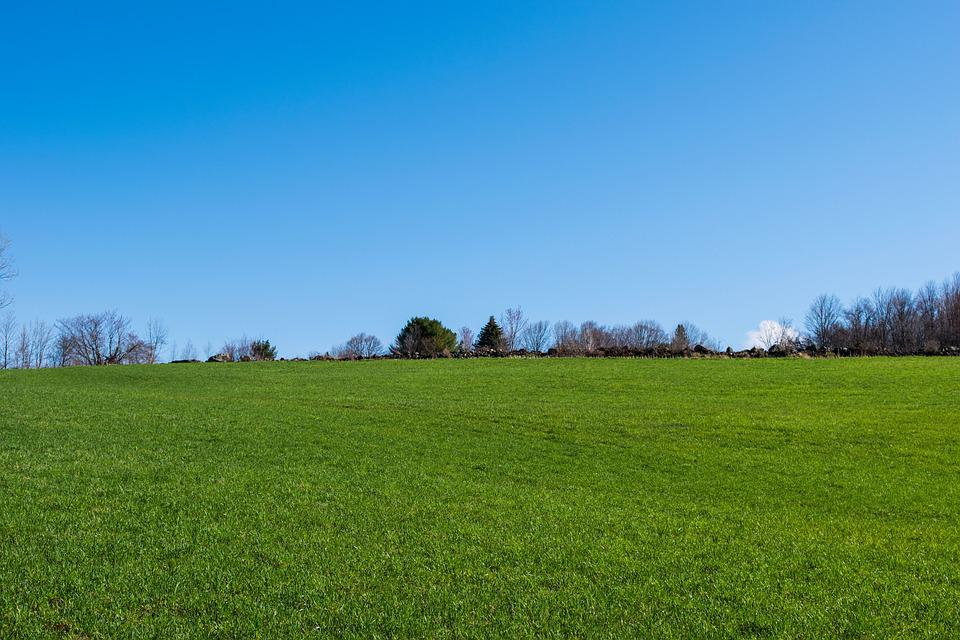 Grass, Nature, Panoramic, Outdoors, Field, Landscape