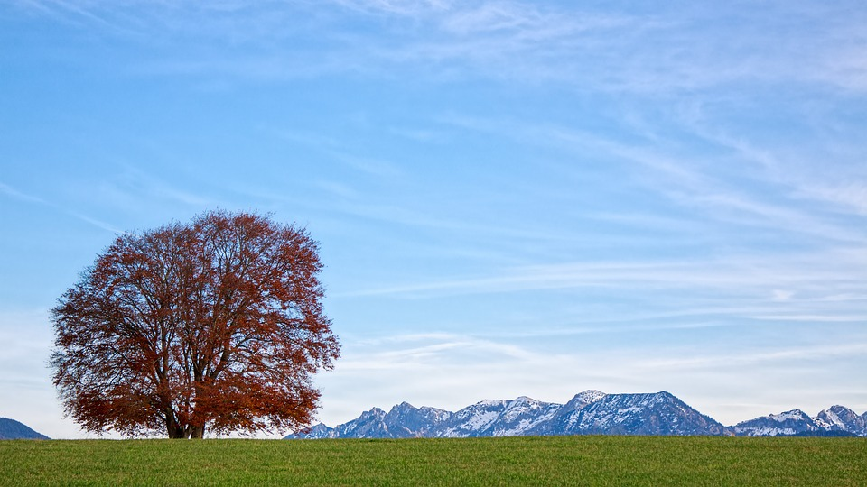 Nature, Landscape, Tree, Panorama, Sky, Alpine, Field