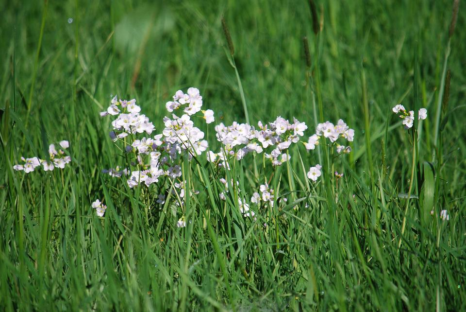 Free photo field priaire flowers grass white wild spring max pixel priaire grass flowers spring field wild white mightylinksfo