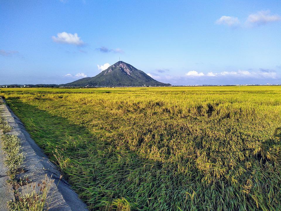 Rice Fields, Field, Meadow, Agriculture, Mountain, Rice