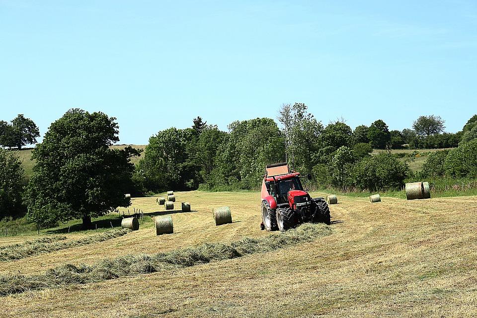 Field, Landscape, Nature, Fields, Grass, Sky, Curves