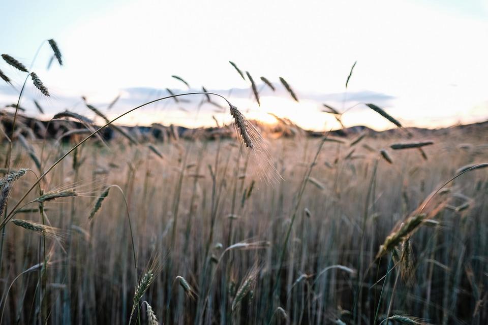 Nature, Sky, Grass, Field