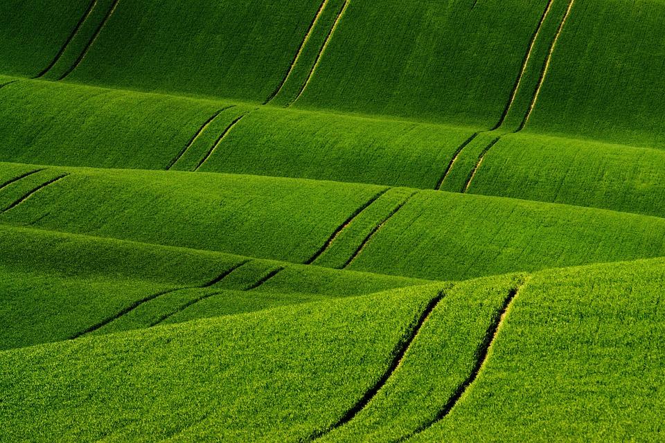 Shading, Spring, Landscape, Green, Field, Plants