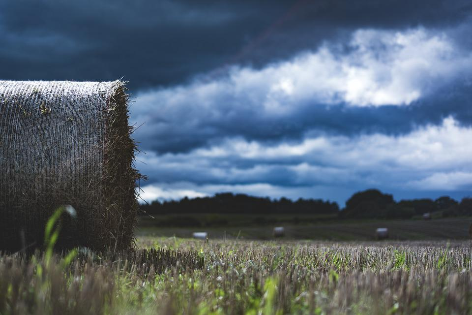 Hay, Field, Agriculture, Straw Bales, Grass, Straw