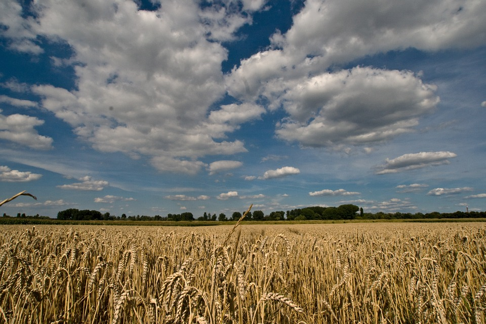 Clouds, Cereals, Field, Summer Sky