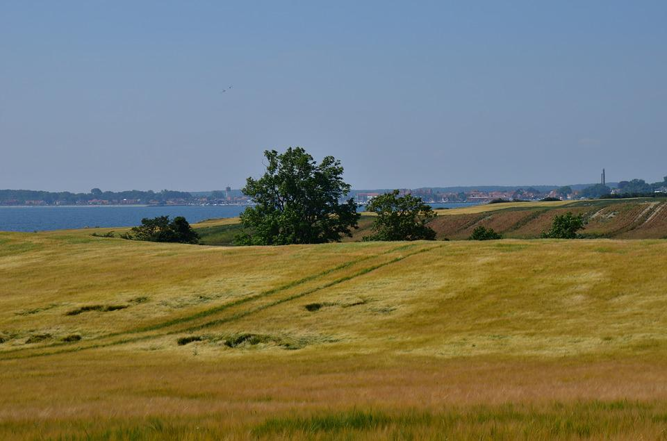 Field, Golden, Wheat Coast, Summer Sun, Blue Sky