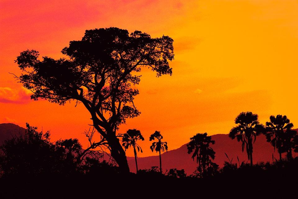 Tree, Sunset, Field, Twilight, Clouds, Sky, Outdoor
